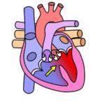 heart diagran, pastels:free